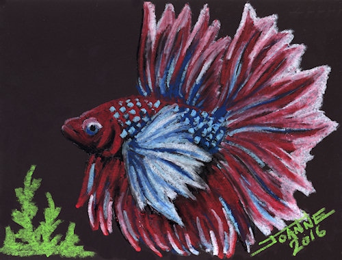 Betta copyright Joanne Howard 2016