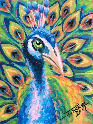 Peacock Copyright Joanne Howard 2017