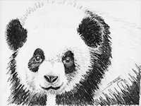 Panda copyright Joanne Howard 2016