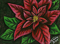 OP Poinsettia Copyright Joanne Howard 2005